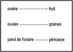 Notions Essentielles De Botanique Generale Graines Et Fruits